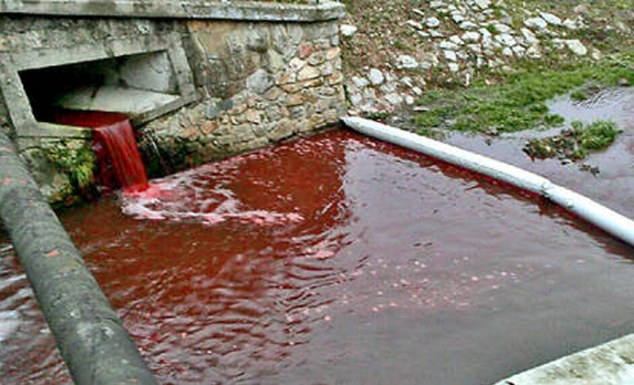 The river of blood: Villagers' shock as Slovakian waterway turns red overnight 'like something from a horror film'