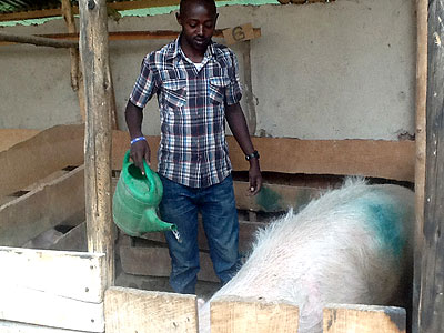 Nsengimana abandoned a bank job for a piggery