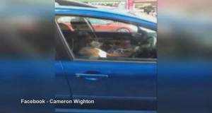 Dog sounds car horn for 15 minutes while waiting for owner