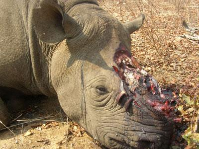China gives the African rhino hope to be alive