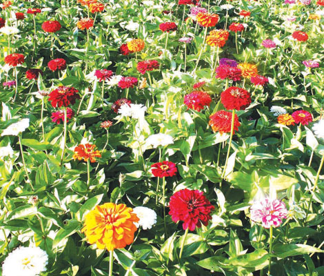 Flower farm goes green with solar power installation