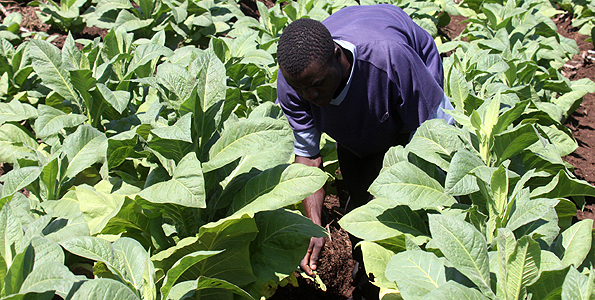 Uganda: Tobacco industry cautions on new legislation